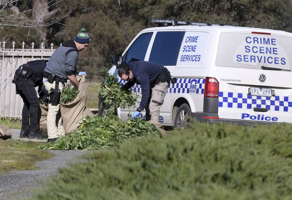 ILLICIT DRUGS: Police inspect a cannabis crop found growing near Ballarat earlier this year.