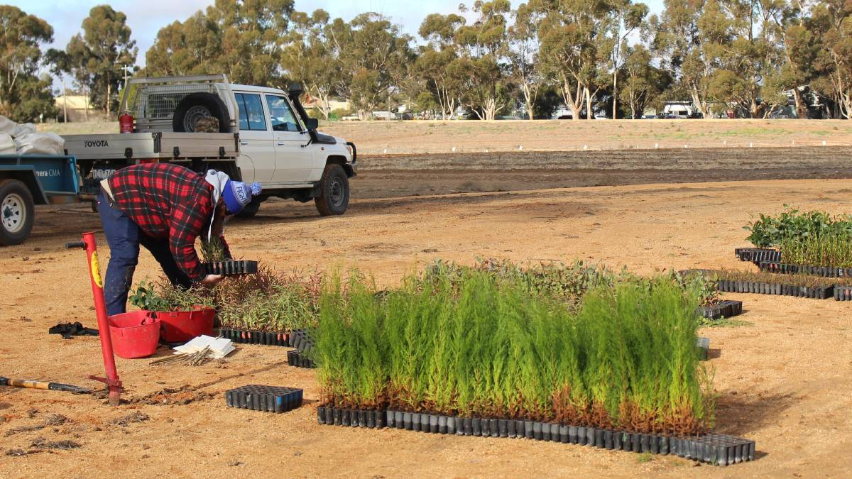 NEW JOBS: Wimmera work crews at the planting sites. Picture: contributed